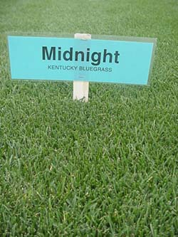 Premium Quality Turf Grass Seed Always Green